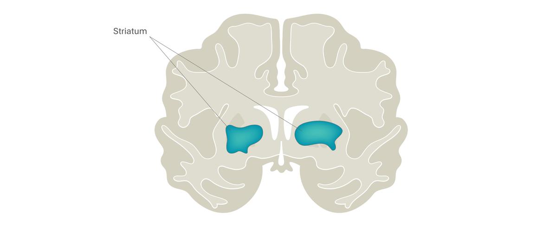 Brain imaging for psychiatrists, Dynamic neuroimaging measures