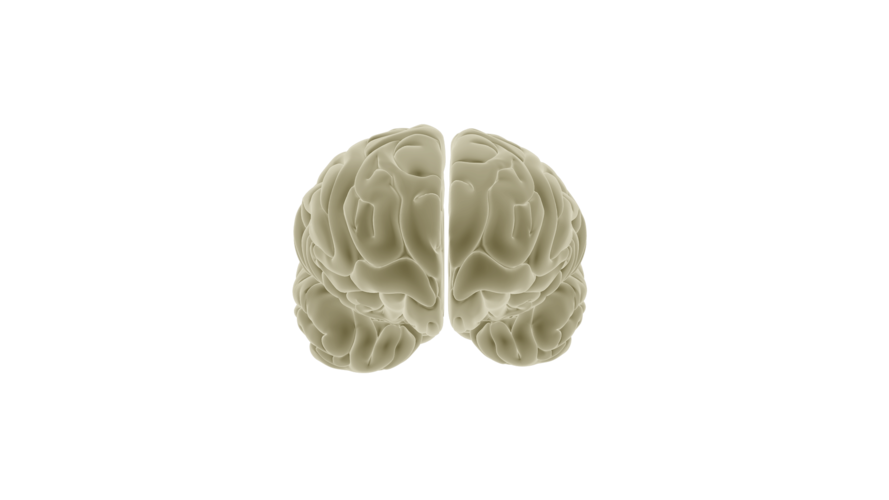 The Brain – Frontal view