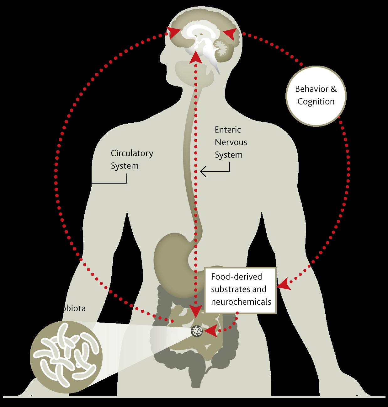 Microbes and brain share neurochemistry